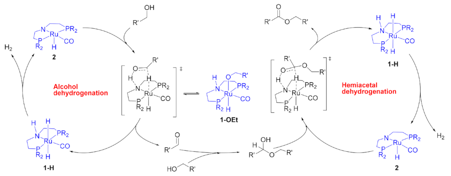 ACD reaction_AFR