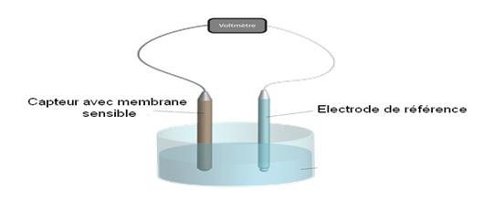capteur membrane